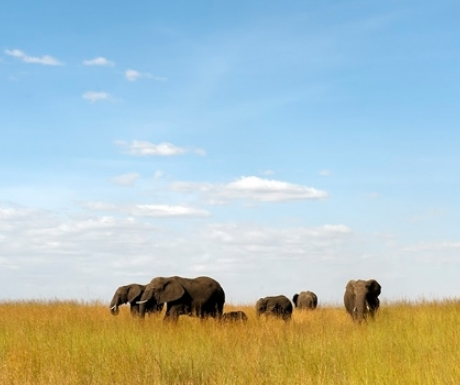 Elephants in Northern Serengeti from Lamai Camp