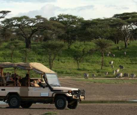 Lemala vehicle with zebra in Ngorongoro Crater