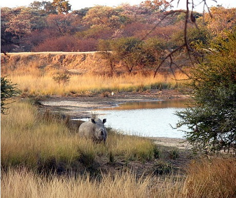 Monate Game Lodge protects the endangered rhino