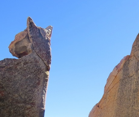 Kagga Kamma rock cat