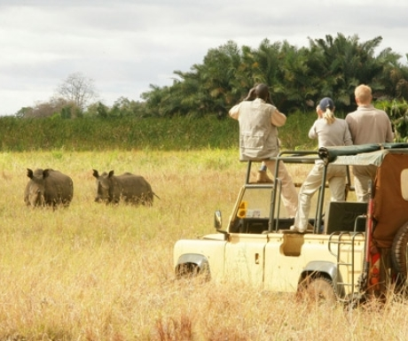 rhino-viewing-in-meru-from-elsas