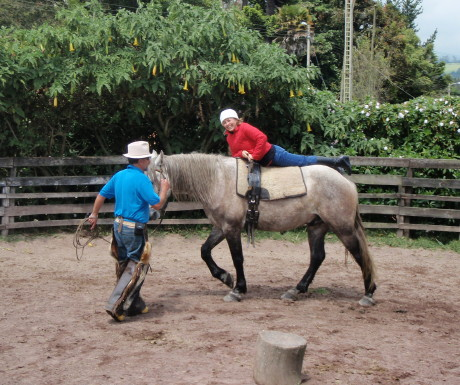 Horseback riding clinic