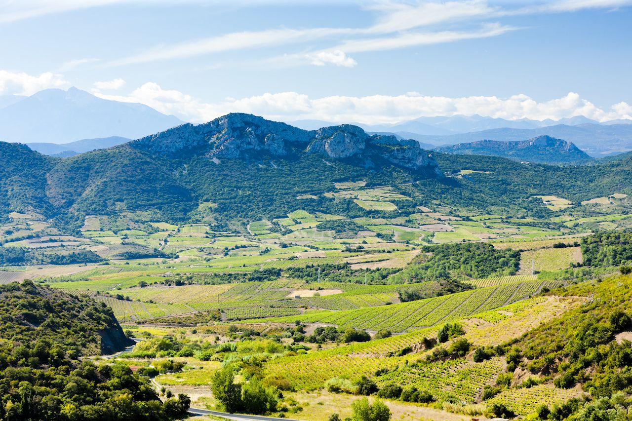 vineyards in Languedoc-Roussillon, France